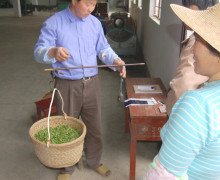 A man weighing a basket of tea leaves