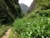 Wu Yi Mountain tea bushes
