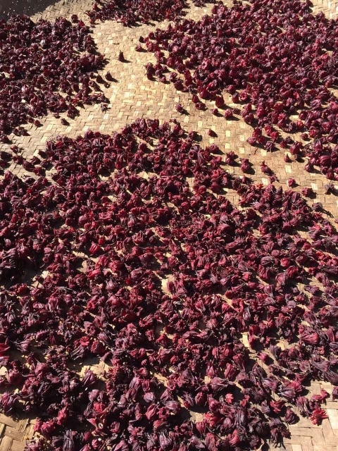 Hibiscus Flowers drying