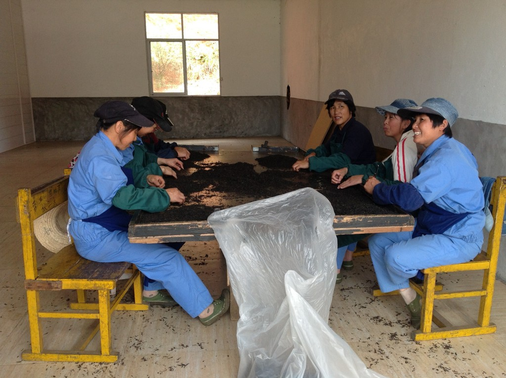 Six people around a table covered in tea sorting Lapsang Souchong.