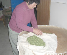 Master Mrs. Wang xiang zhen wrapping leaves in cloth