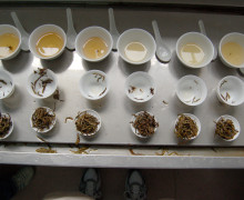 Assessing different grades of wulong tea.