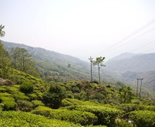 View of the Kurseong valley from the slopes of Giddapahar Darjeeling Tea Estate