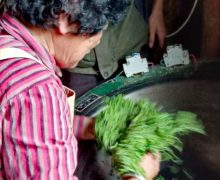 A woman bending over a wok to toss the Mogan Huangya leaves frying in it.