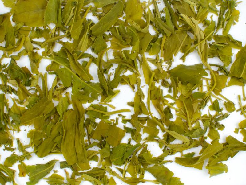 Yun Wu wet tea leaves floating in clear water.