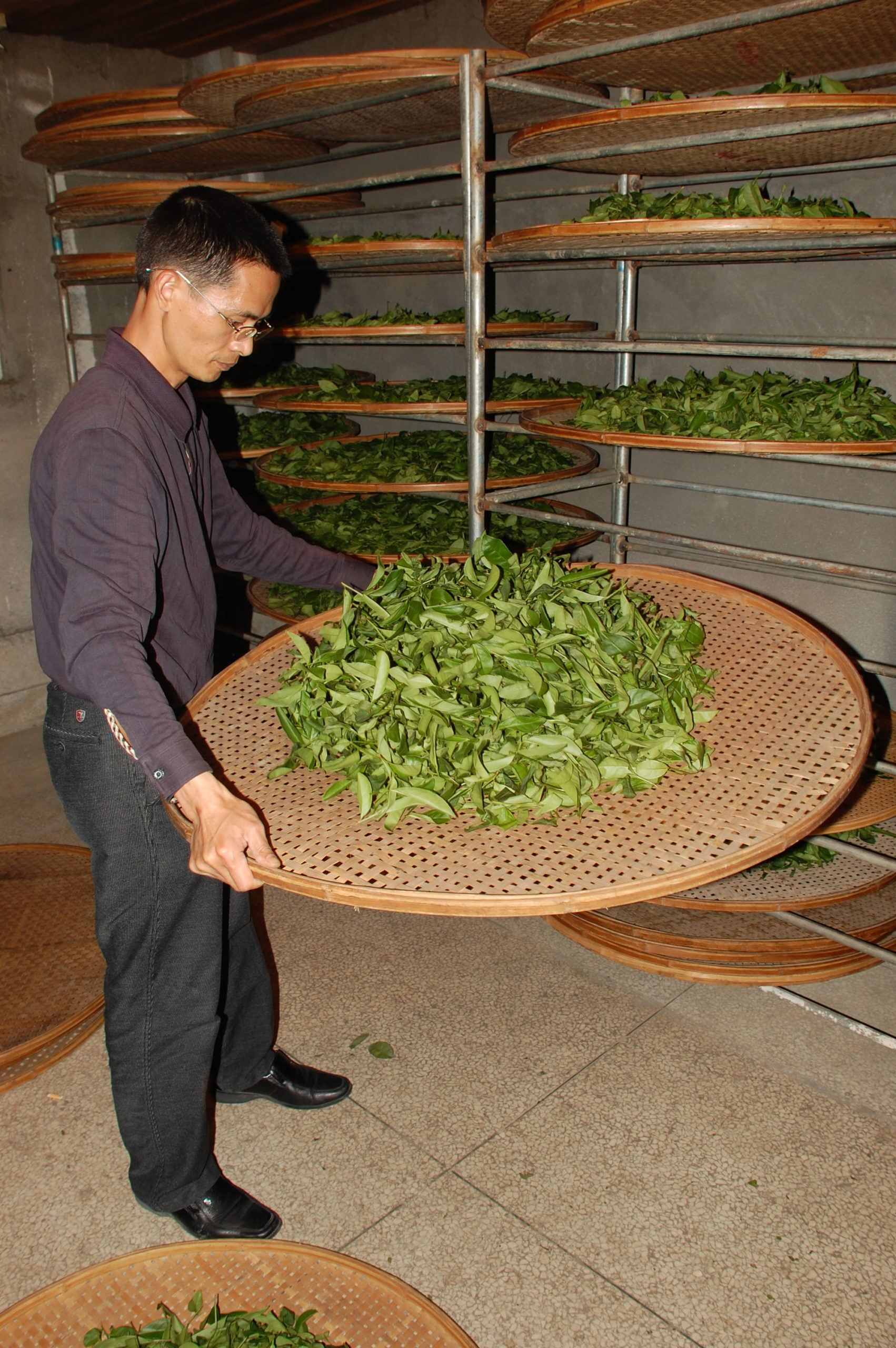A man holding a large round bamboo tray and lightly tossing the tea leaves on it. Many more such trays rest on vertical racks in the background.