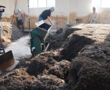 People breaking up a large waist-high pile of fermenting Sweet Dragon Ball Shu Puer fermenting leaves with large shovels in a tea processing factory.