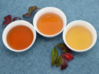 Three cups of tea in different shades of amber, on a blue fabric background and surrounded by leaves.