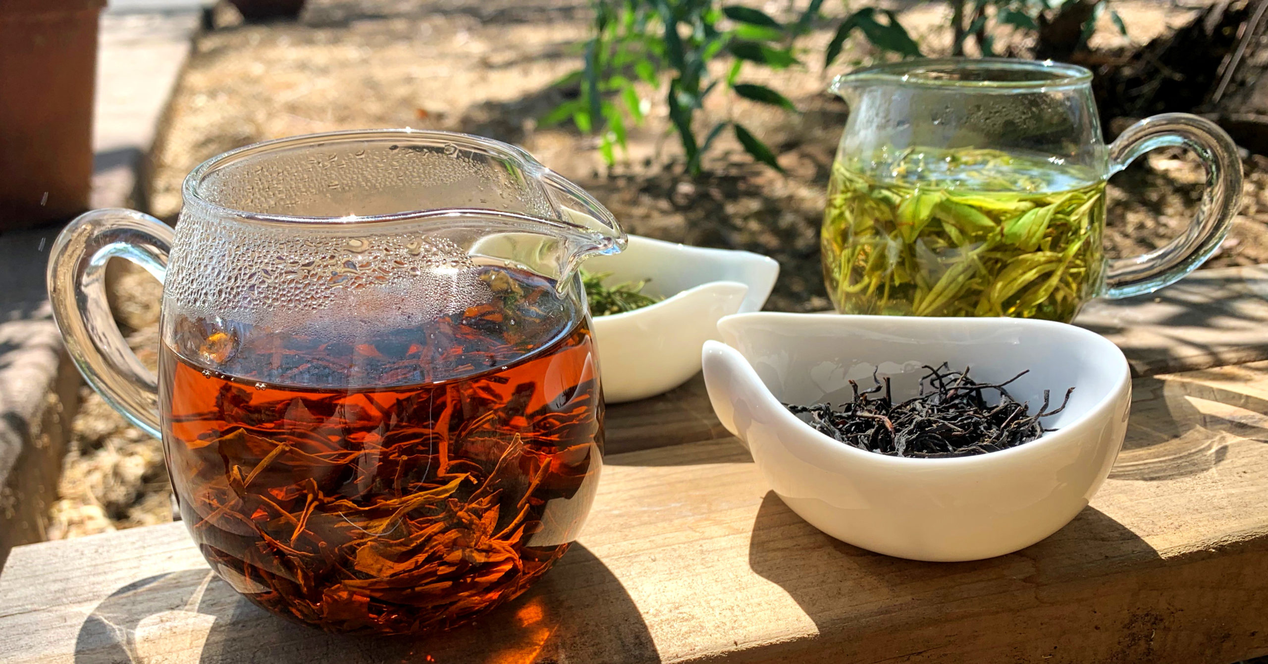 Two glass pitchers of green and black tea and two porcelain dishes of their dry leaves, outside on a wooden plank in the sunlight.
