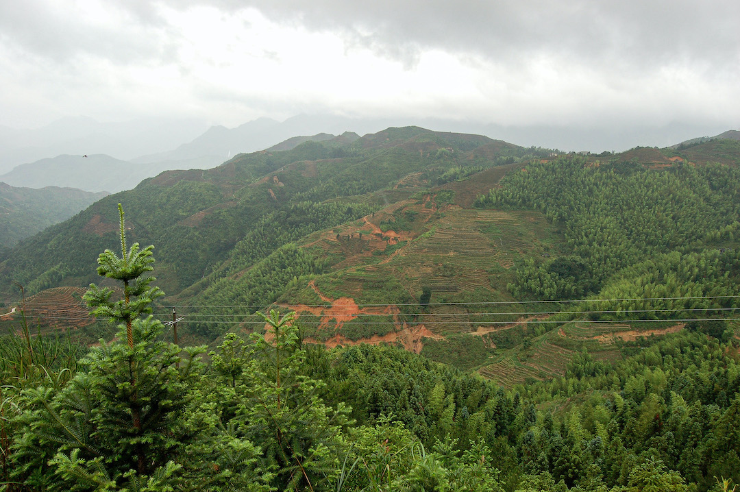 Looking across a range of green forested mountains on a cloudy day. The mountains in the middle distance are lined with tea terraces that naturally follow their curve.
