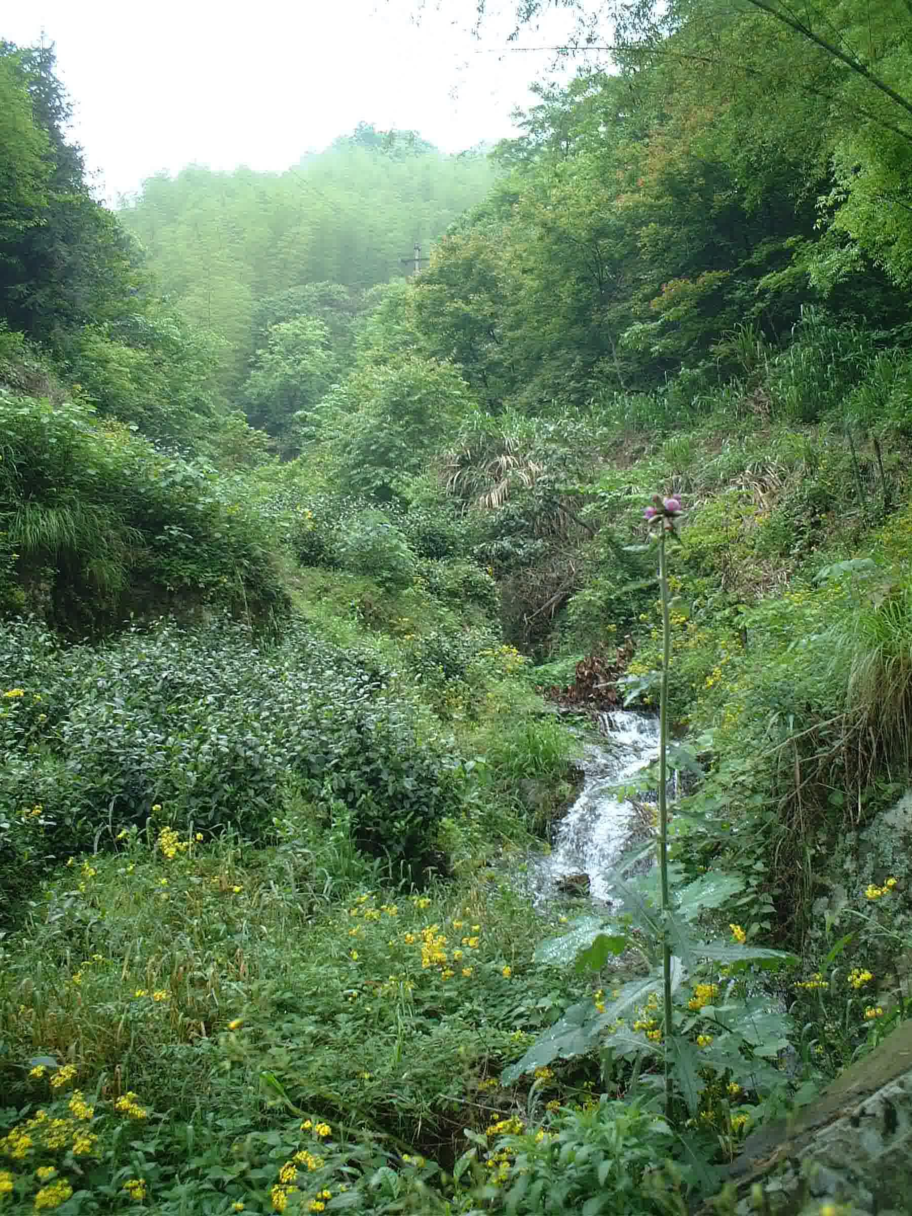 A small stream running through a lush green mountain valley full of tea bushes, trees, and wildflowers.