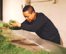 A man leaning over a table to sprinkle handfuls of fresh tea buds over the ventilated table's surface.