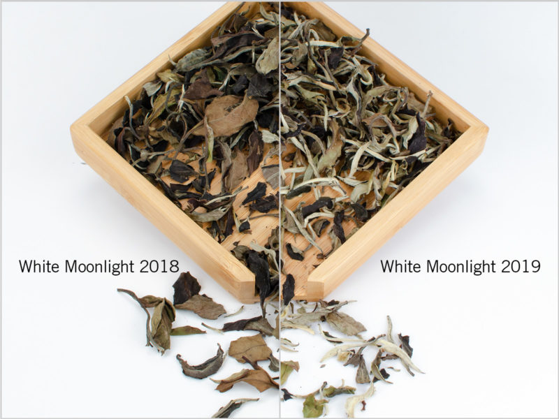Comparison of 2018 and 2019 White Moonlight Puer Tea
